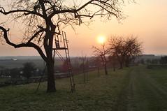 Mrzabend (mellane.karin) Tags: sunset tree march sonnenuntergang baum mrz schnbuch entringen ammertal schnbuchrand