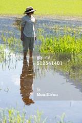 risaie2 (quintaainveruno) Tags: fotografia verticale risaie caucasico soltantounapersona 4044anni adultoinetàmatura