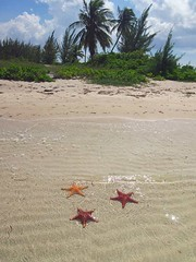 STARFISH POINT BEACH (Acquarius Sea Tours) Tags: starfish ky grandcaymanisland grandcaymancruise aboutcaymanislands whereisgrandcayman grandcaymanfaq aboutgrandcayman