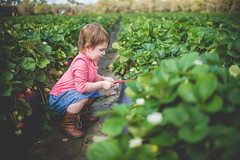 Strawberry Picking! (annamargaretphotography) Tags: portrait tampa florida strawberries strawberrypicking