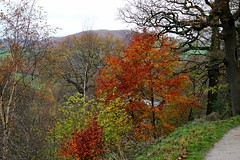 Changing Colours (jmayne27) Tags: uk autumn england orange colour green fall nature leaves walking landscape outdoors countryside leaf hiking yorkshire colourful yorkshiredales