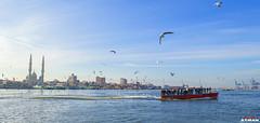 (Ayman Abu Elhussin) Tags: morning bird port egypt portsaid kanal   ayman nikon3200        portfouad     suezkanalauthority  aymanabuelhussin