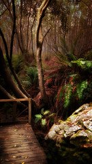 Forest Walkway (WelshPixie) Tags: trees rock forest wooden moss woods boulder walkway footpath