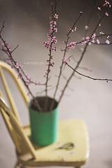 Plum Blossoms (a mothers art photography (Gail)) Tags: pink stilllife green yellow vintage blossoms maplesyrup plumblossoms bestill vintagebucket bestill52