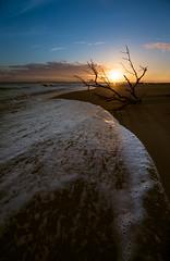 Sunset Driftwood (jen sketch) Tags: ocean sunset sea sky sun beach water island sand wave driftwood shore edisto
