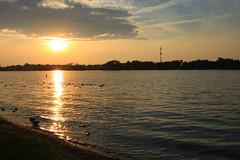 Ducks on the lake (D Clay Wilson) Tags: lake water outdoor ducks geese birds serene sunset cloud sky beach shoreline landscape