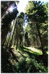 Wood - Bosco (daril77) Tags: veneto vicenza italy italia altipiano asiago rays raggi campolongo