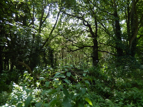 Woods, 2016 Jul 06 -- photo 3