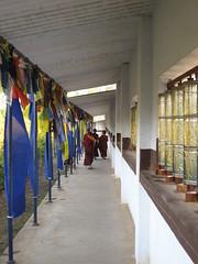 IMG_2501 (Sasha India) Tags: india buddhism karnataka indien hindistan buddhismus 印度 भारत littletibet הודו 인도 இந்தியா الهند буддизм هندوستان индия ινδία індія карнатака հնդկաստան אינדיע อินเดีย ભારત ინდოეთში