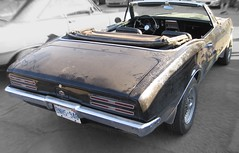 Dusty bird 2 (60Fire) Tags: ontario canada black classiccar guelph chrome 1967 firebird pontiac survivor dailydriver