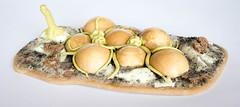Tyranid scenery: Eggs for breakfast (Will Vale) Tags: 28mm 40k scifi scalemodel tyranid gamesworkshop wh40k tyranids scenery