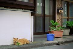 /Hanno,Saitama (eisei_toshi) Tags: g7x    cat