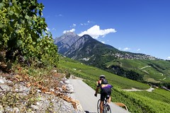 Valais vineyards (will_cyclist) Tags: cycling derborence switzerland vallais vineyards