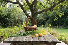 ckuchem-2051 (christine_kuchem) Tags: tisch korb deko dekoration apfelernte naturgarten herbstgarten