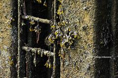 Slippery steps (tommyajohansson) Tags: greatbritain seaweed geotagged scotland aberdeenshire unitedkingdom steps aberdeen ladder weekendbreak citybreak tng sjgrs tommyajohansson