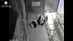 2016_07-27a (gkoo19681) Tags: beibei meixiang treattime stealing ccncby nationalzoo