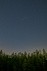 Perseid over a cannabis field (Michal Jeska) Tags: perseid meteor shower comet swifttuttle 109pswifttuttle meteorstrom meteorschauer sternschnuppe sternschnuppen sternschnuppenschwarm hanf cannabis fujifilm fuji xpro1 xseries x pro1 samyang rokinon 14mm 28 homburg saar saarland