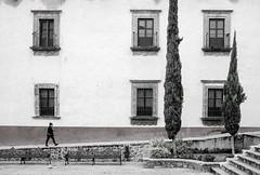 Plaza Civica (Maria Sciandra) Tags: mariasciandraphotography mexico sanmigueldeallende wwwmariasciandracom streetphotography cypresstrees colonialmexico womanwalking ramp