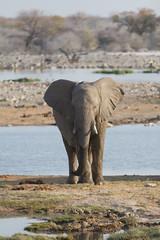 Namibia 2016 (358 of 486) (Joanne Goldby) Tags: africa africanelephant august2016 elephant elephants etosha etoshanationalpark explore loxodonta namiblodgesafari namibia safari