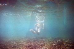 (Benedetta Falugi) Tags: film filmisnotdead filmphotography fujisuperia analog analogue analogic summer shootingfilm swimmingpool swimming beliveinfilm benedetafalugi blue girl woman water calidario istillshootfilm ishootfilm light lightleaks disposablecamera underwatertoycamera underwater