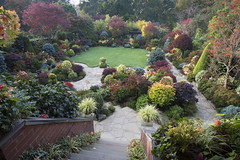 View of mid autumn garden from the balcony steps (October 21st) (Four Seasons Garden) Tags: four seasons garden uk england autumn october 2016 colours foliage japanese yorksone maple acer ornamental conifers evergreens sunlight begonia flowers red blue yellow orange palmatum