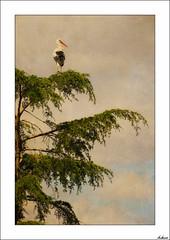 La brjula (V- strom) Tags: cigea cielo textura nikon naturaleza nikon2470 nubes verde rbol blanco negro recuerdo fauna