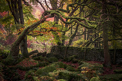Mystic Wood (Dave Fieldhouse Photography) Tags: padleygorge padley trees wood autumn halloween drystonewall peakdistrict nationalpark derbyshire derbyshirelife grindleford fuji fujixt2 bracken leaves morning