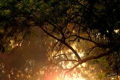 Lever de Soleil sur le Cher (Michel Craipeau) Tags: 2016 37150 arbre blr blrvaldecher branche canon centrevaldeloire chemonceaux cher craipeau craipeaumichel eos600d eosrebelt3i france indreetloire lev levdesoleil michel octobre2016 reflet rivrelecher sigma18250mmf63 soleil blr blrvaldecher lev levdesoleil rivrelecher sigma18250mmf63
