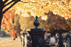 """Autumn...the year's last, loveliest smile.""""~William Cullen Bryant~ (Sandra H-K) Tags: fencefriday fence hff helios402 autumn autumnleaves tree branches yellow outside outdoors orange october bokeh bokehlicious bright sunshine sunny dof depthoffield day daytime sunlight"""