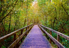 Boardwalk (rustyruth1959) Tags: nikon nikond3200 tamron16300mm germany lowersaxony steinhudermeer walkway boardwalk wood planks outdoor nature forest woods trees fence leaves branches twigs
