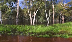 Murrumbidgee (Teutonic01) Tags: newsouthwales hay murrumbidgee river flood spring
