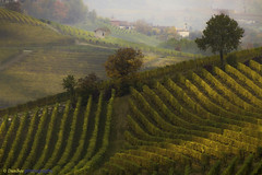 Langhe - Piedmont (Italy): Vineyards in Autumn (www.danbos.it) Tags: elitegalleryaoi bestcapturesaoi