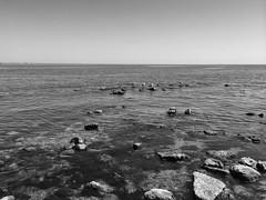 4 seagulls (ksenya13_11) Tags: sea bw seagulls white black water stones crimea feodosiya