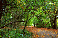 Heriot Wood (Eleanor (No multiple invites please)) Tags: uk autumn trees leaves gate path hornbeam stanmore bentleypriorynaturereserve nikond7100 october2014 heriotwood