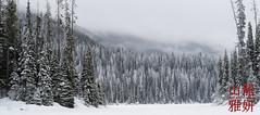 Winter Wonderland (DragonSpeed) Tags: camping winter snow canada ice pine landscape bc fir manningpark wintercamping ecmanningprovinicalpark