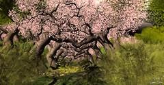 ~Pandora Box of Dreams~ Dream 001: Dreams of Sakura (Sannita_Cortes) Tags: flowers art nature statue japan japanese dove dream dreaming sl secondlife virtual installation imagination sakura virtuallandscape virtualwordl virtualnature pandoraboxofdreams