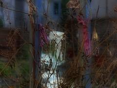 Jellyfish at Fools Tower, l`heure bleue - or a Parachute ~ Quallen unterwegs, weisse Medusa  beim Narrenturm - oder ein Fallschirm - Gemeinschaftsgarten zur blauen Stunde (hedbavny) Tags: vienna wien pink blue winter white art fence garden campus psychiatry austria österreich jellyfish exercise action kunst diary laub rosa collection unterwegs universität bachmann blau zaun medusa garten psychiatrie tagebuch fool nhm hof aktion gitter mythos insaneasylum narr etude nuthouse qualle anatomie rosine workingroom narrenturm werkstatt mythologie mentalinstitution undine sammlung lunaticasylum gugelhupf madhouse weis mascherl übung pasin irrenhaus arbeitsraum naturhistorischesmuseumwien alsergrund pathologie altesakh aktionismus irr actionism kopffüsser geschlosseneanstalt pathologisch narrenhaus gemeinschaftsgarten hedbavny pathologischanatomischesammlungdesnaturhistorischenmuseums ingridhedbavny narrenturmungezählt