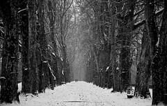 Platanenallee (drdowntown33) Tags: winter nikon tbingen d610 platanenallee