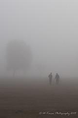 stroll with friend 1 (Michael Kenan) Tags: morning arizona tree phoenix fog foggy az atmospheric