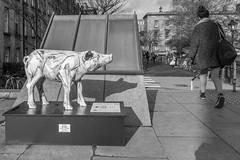 Pig for charity (Virtual - MostlyVirtual.COM) Tags: street charity ireland blackandwhite bw dublin pig streetphotography statues trinity pigs jackjill