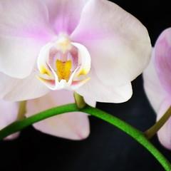 Orquideas (pauli.lazo) Tags: flores garden nikon orquídeas amateurs nikonistas