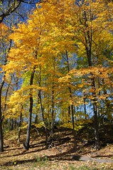 2014 Fall Colors 60 (DrLensCap) Tags: chicago tree fall robert colors illinois woods il kramer caldwell