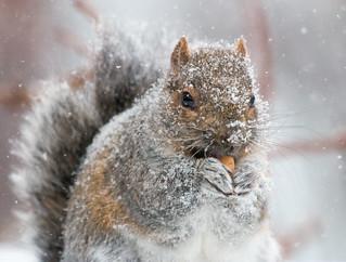 Winter, Quebec