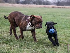 Kevin & Friends (TinyTina83) Tags: dog animals tiere kevin natur hund canoneos elbe tinytina sachsenanhalt 60d tinaschildhauer