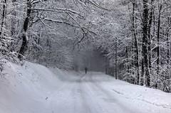 Walking in the snow... (Matthias Harbers) Tags: road street winter blackandwhite bw snow tree forest germany walking deutschland woods sony cybershot dxo heidelberg hdr badenwürttemberg photomatix königstuhl tonemapped rx100 flickraward