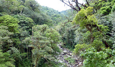 Rio Palo Alto, Boquete, Panamá. (helicongus) Tags: