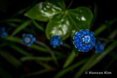 Flowers in Allen Garden