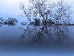 Somber Wonderland (Zazii529) Tags: christmas blue winter sky cloud snow tree ice nature rain photography grey gray wonderland somber relfection iphone platinumheartaward iphone6