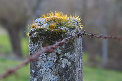 Fence post   Zaunpfahl (Oliver Liegmann) Tags: fence zaun fencepost zaunpfahl
