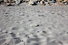 Quiberon - Trace Mouette (damientupinier) Tags: france beach nature traces sable bretagne plage mouette oiseaux